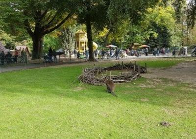 Tiergarten MG 3 (c) MGMG_Dob_1920x1080