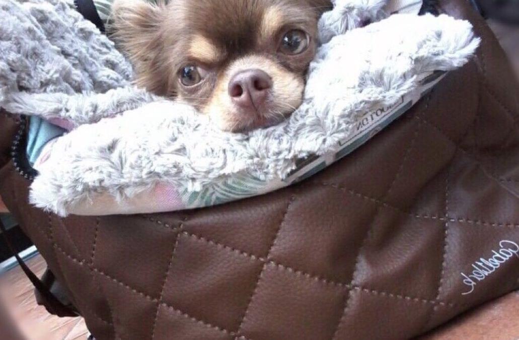 GabelWerk – Manufaktur für Hundetaschen