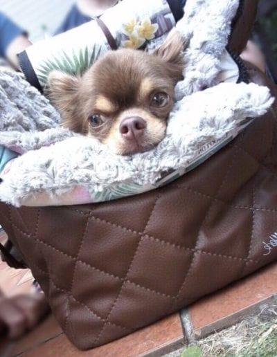 GabelWerk - Manufaktur für Hundetaschen
